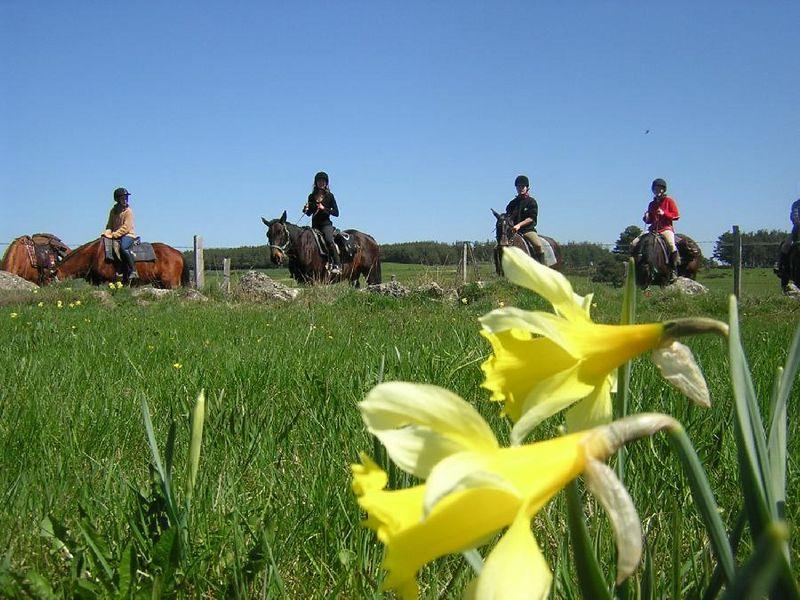 """Résultat de recherche d'images pour """"cheval printemps"""""""